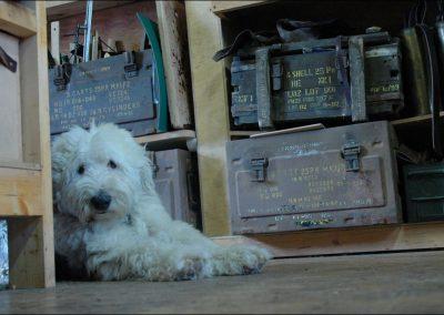 Teddy-in-the-studio-at-debruir